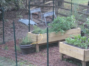 garden and summer 2012 026